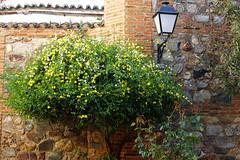 Caceres, Patrimoine de l'Humanité (hans pohl) Tags: espagne estrémadure caceres plantes plants fleurs flowers nature murs walls architecture lampadaires