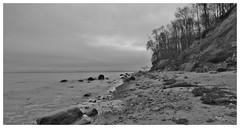 An der Steilküste, Brodtener Ufer.... (Hier und Jetzt) Tags: steilküste ostsee schwarzweis küste travemünde natur blackwhite balticsea