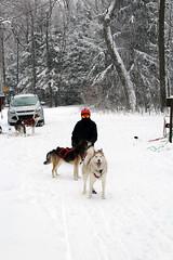 IMG_0042_AutoColor (LifeIsForEnjoying) Tags: snow mushing dog sledding dogs snowboard sled kaskae nike