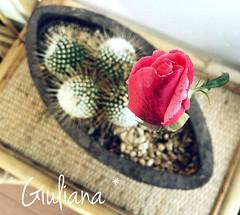 Rose (° Giuliana *) Tags: flower flowers fiori natura nature macro rose roses vaso garden photo photography flickr fotografia foto italy italia january gennaio