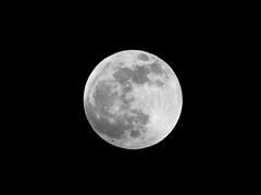 Full moon ((nature_photonutt) Sue) Tags: fullmoon ouryard ironbridgeontariocanada