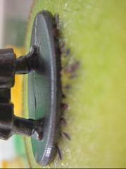 Capture (amendolare.margaret) Tags: macro contrast color wormseyeview