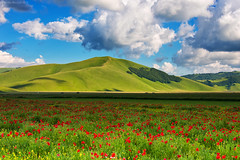 "Castelluccio di Norcia, ""Piano Grande"", Central Italy (Claudio_R_1973) Tags: pianogrande castelluccio umbria centralitaly italy poppies field grass highland mountain sky cloud landscape colorful vivid nature wilderness apennines grassland"