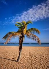"""All Alone"" (Vest der ute) Tags: xt20 palmtrees beach sky bluesky sand spain clouds"