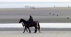 Relaxing at Murlough Beach, Co. Down (ronmcbride66) Tags: beach horses horseriding oldgroyne sand sea coast coastline codown nireland