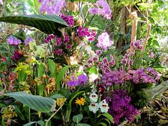"""""""1001 orchidées""""- 1 (Raymonde Contensous) Tags: paris jardindesplantes grandeserre orchidées fleurs nature plantes expositions"""