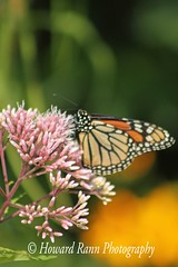 Middle Creek SWR (379) (Framemaker 2014) Tags: middle creek wildlife refuge stevens pennsylvania fish game commision lancaster county united states america