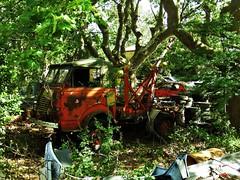 Renault 2087 Goélette 4x4 Campagnan (34 Hérault) 14-06-16a (mugicalin) Tags: fujifilm fujifilmfinepix fujifilmfinepixs1 s1 finepixs1 finepix camion truck frenchtruck classictruck orange orangetruck camionorange 2016 casse scrapyard junkyard rustycar epave abandonedcar schrottplatz cimetièresdevoitures renault renaulttruck lkw camionrenault oldtruck abandonedtruck vintagetruck camionmilitaire militarytruck frencharmy arméefrançaise armée army campagnan 34 hérault vučnovozilo towtruck towtrucks dépanneuse abschleppfahrzeug sleepwagen carroderemolque carroattrezzi 4x4 10fav 20fav