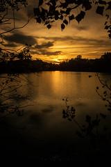 Sonnenuntergang (EmPi Fotografie) Tags: sonnenuntergang landschaft see blätter wasseroberfläche lichtstimmung gelb magisch