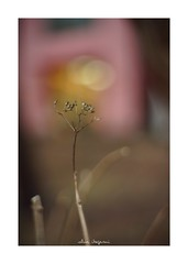 2019/2/8 - 8/9 photo by shin ikegami. - SONY ILCE‑7M2 / Lomography New Jupiter 3+ 1.5/50 L39/M (shin ikegami) Tags: asia sony ilce7m2 sonyilce7m2 a7ii 50mm lomography lomoartlens newjupiter3 tokyo sonycamera photo photographer 単焦点 iso800 ndfilter light shadow 自然 nature 玉ボケ bokeh depthoffield naturephotography art photography japan earth