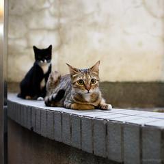 Cat &Cat (kevinho86) Tags: 35mm cat 貓 小貓 snapshot canon eos6d colour