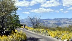 _DSC3349 (aakeene) Tags: saguaroparkeast tucson arizona desert cactus road mountains sky plants bicycle