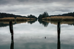 Reflet (Meculda) Tags: reflet nikon france yvelines trip 35mm extérieur lac eau water étang hollande bois composition hiver 2019 fôret tree forest arbre nature natural