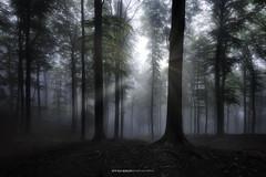 #041 Ray of Light 2018 (Enrico Boggia | Photography) Tags: rayoflight raggidisole rayofsun ray sun wood forest foresta bosco natura nature altomalcantone malcantone luganese 2018 enricoboggia