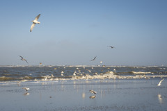 A sunny Winter day at the North sea (Martin Bärtges) Tags: north sea nordsee meer water birds vögel möwen sky blue himmel blau nikon d4 nikonfotografie nikonphotography volorful farbnefroh drausen outdoor outside landscape landschaft landscapelovers natur nature naturephotography naturfotografie landscapephotography landschaftsfotografie