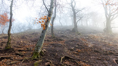 Forest inside (BenedekM) Tags: pilis nature nikon nikond3200 d3200 sigma sigma1750f28 woods trees fog foggy clouds mountains hills rock rockymountains hungarian hungary roots root leaves