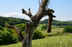 Landschaft mit Baum (antje whv) Tags: schaumburg rheinlandpfalz baum tree landschaft landscape