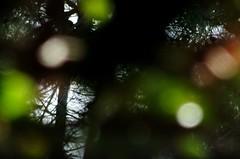 Leaves blur effect (Valdegris) Tags: leaves blur transparency feuilles flou transparence darkgreen vertsombre