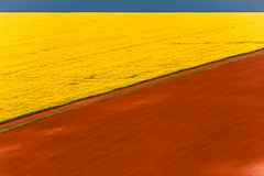 Y / B (Evgeni Dinev) Tags: abstract agriculture browncolor bulgaria day environment europe field furrow land landscape nature outdoors pastoral picturesque rapeseed relaxation ruralscene soil springtime sunny tranquility yellowcolor silistra