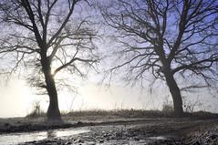Ombres chinoises 1 (Evim@ge) Tags: brume soleil « lever de » sunrise mist misty brumeux chemin track sentier hiver glacé icy light lumière lumineux lithty arbres trees grésivaudan