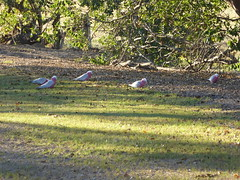 holiday-2016-077_26867529456_o (AussieAl1) Tags: holiday2016