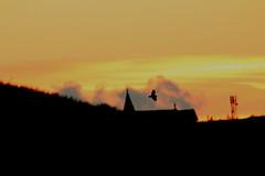 IMG_1722 (monika.carrie) Tags: monikacarrie wildlife scotland aberdeen shortearedowl sunset