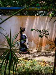 Salvador (Fotógrafo / Photographer) Tags: bonfim casa jorgeamado