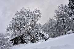 Winter Dream - Bavaria (W_von_S) Tags: winter dream wintertraum winterlandschaft wintertime winterwonderland winterpanorama schnee schneelandschaft snow snowscape snowlandscape tree baum hütte alpen alps bavaria bayern germany deutschland landschaft landscape paysage paesaggio sony sonyilce7rm2 wvons werner outdoor