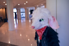 Redacted Rat_FTM 2019_08 (Eshe Is Life) Tags: rat rodent bruiser greaser fight king sassy saucy hot tough rough injury injured eye nose crown fur furry convention hotel leather jacket fashion fuzzy confident cool edgy