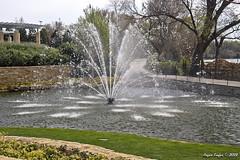 IMG_5551 (Roger Kiefer) Tags: dallas arboretum outdoors beauty nature landscape