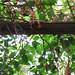 2004-08-20_11-13-21_anon Powe_IMG_3657