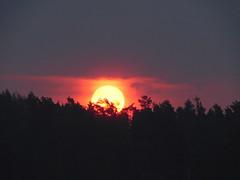 Faszinierend!!! (elisabeth.mcghee) Tags: sonnenaufgang sunrise sun sonne wald forest bäume trees himmel sky oberpfalz upperpalatinate