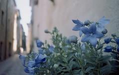 Pienza (michele.palombi) Tags: pienza tuscany film analogic 35mm negativo colore valle orcia