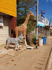 Giraffe and Zebra statue (SierraSunrise) Tags: animals esarn giraffe isaan nongkhai phonphisai statues thailand zebra
