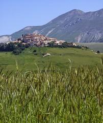 21 giugno: in attesa della grande fiorita (giorgiorodano46) Tags: giugno2013 june 2013 giorgiorodano castelluccio umbria italy verde green estate primavera summer spring