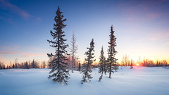 Winter snowy tundra panorama with spruce hoarfrost (czdistagon.com) Tags: winter snow landscape frozen fir beautiful frost new year dawn white season forest hoarfrost sun cold nature outdoor hoar spruce wood background snowy snowfall holiday vacation hill wonderland travel ice cloud panorama scene cover nobody panoramic view powder shadow scenic trip weather silence natural breathtaking tourism russia