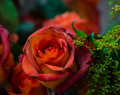 True Beauty..................................... (Omygodtom) Tags: bokeh red bouquet rose natural nature nikon d7100 digital coth5 nikkor nikon70300mmvrlens dof flower flickr flora macro
