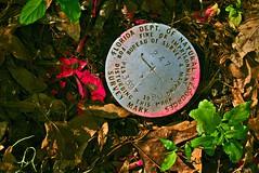 Survey Marker (surfcaster9) Tags: survey marker ground florida lumixg7