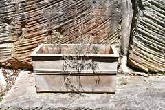 Garden City crime (stalkertoow) Tags: garden fail dead plan pot 2019 20
