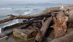 "Questa è ""Maremma"" - This is ""Maremma"" (Jambo Jambo) Tags: tronchi trunks spiaggia beach maremma parcoregionaledellamaremma parcodellamaremma grosseto principinaamare boccadombrone toscana tuscany italia italy panorama landscape jambojambo sonydscrx10m4"