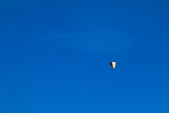 52-6 : Homing (315Edith) Tags: canon 70d 135mm bird egret solo blue sky 52weekphotoproject minimalism negativespace