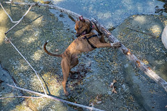 Doug and His Stick (Parker Vandermeer) Tags: 2018 canada dog fall hiking nopeople r2 rocks travel vancouverisland