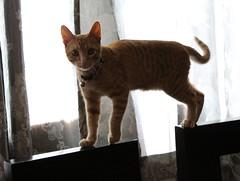 Napoleón (jorluis3098) Tags: gat kat cat life light sunny sun see canon camera photography picture planet