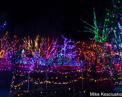 915A6297 (mikekos333) Tags: 2018 december christmas christmaslights coastalmainebotanicalgardens boothbay
