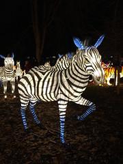 OH Columbus - Ohio Chinese Lantern Festival 50 (scottamus) Tags: columbus ohio franklincounty holiday winter christmas light lanter display night ohiochineselanternfestival dragonlightscolumbus zebra