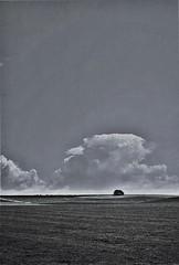 Big Skies (1), Avebury, April 2016 (Mano Green) Tags: tree sky clouds field landscape horizon avebury wiltshire england uk april spring 2016 canon canonet 28 ilford xp2 super 400 35mm film big skies
