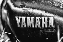 That's Why We Pray for Our Souls to Keep (Thomas Hawk) Tags: allbikesales america arizona phoenix rye usa unitedstates unitedstatesofamerica yamaha bicyclejunkyard bikejunkyard bw emblem junkyard motorcycle motorcyclejunkyard payson us fav10 fav25