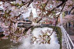 Llegó la primavera (Juan Ig. Llana) Tags: bilbao bizkaia vizcaya españa es ciudad primavera flor ramas árbol cerezo río ría agua iglesia sanantón muelle marzana