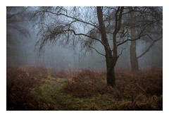 Ashdown Forest - December 30th (Edd Allen) Tags: woods woodland forest trees treescape nikon nikkor70200mm atmosphere atmospheric serene bucolic fog mist light sunrise foliage ethereal eastbourne uk england southeast eastsussex country countryside ashdownforest winter autumn pine