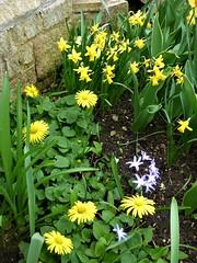 P1080591 (KENS PHOTOS2010) Tags: flowers gardens gardening